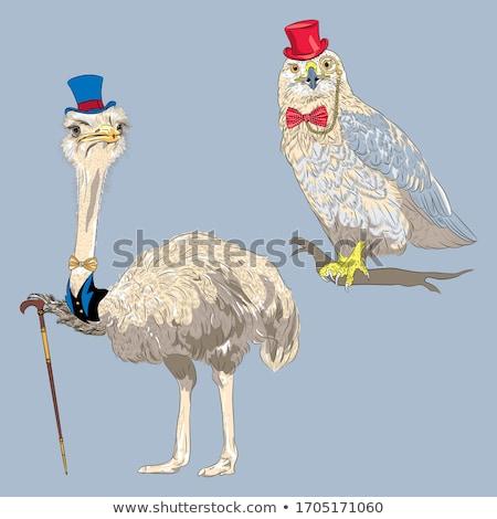 Grave cartoon struzzo illustrazione uccello Foto d'archivio © cthoman