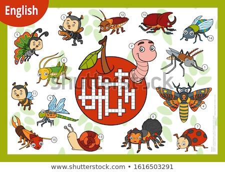 English parola scarafaggio illustrazione scuola Foto d'archivio © bluering