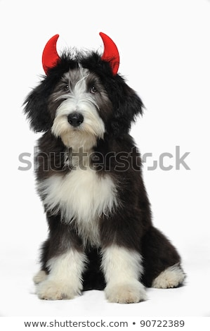 black and white dogs wearing red devil horns for halloween Stock photo © feedough