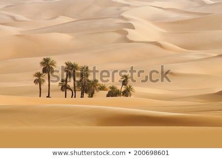Sandigen Wüste Ägypten Sonnenuntergang Himmel Landschaft Stock foto © Givaga