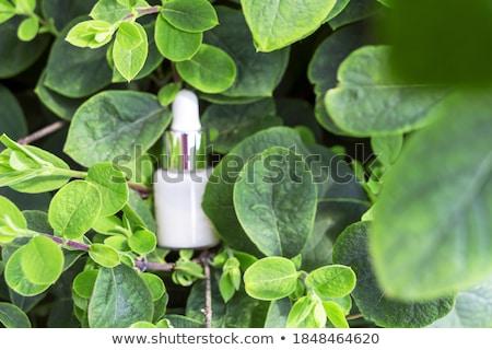 Arckrém szérum testápoló hidratáló arc olaj Stock fotó © dashapetrenko
