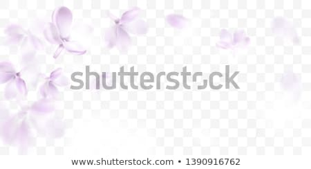 Foto stock: Natural Product Isolated Transparent Background