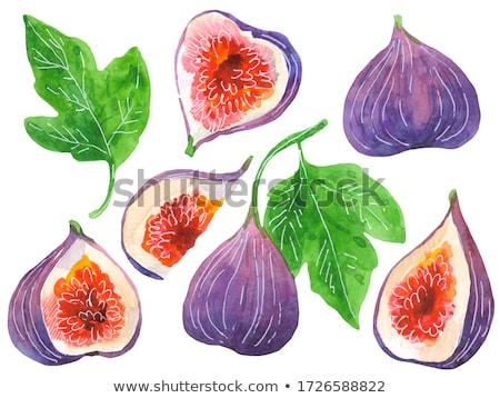 инжир · фрукты · изолированный · белый · экзотический · зеленый - Сток-фото © bdspn