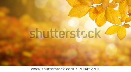 velho · grunge · quadro · outono · carvalho · folhas - foto stock © galitskaya