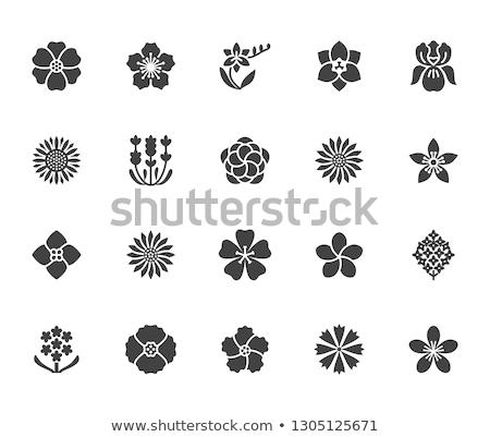 花 アイコン ボタン デザイン 芸術 ストックフォト © angelp