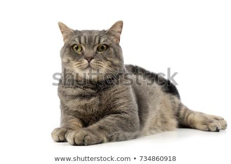 gato · preto · amarelo · olhos · laranja · preto · papel · de · parede - foto stock © vauvau