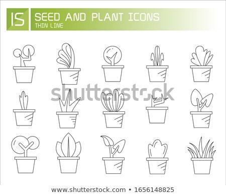 Arbusto planta folhas pote vetor fino Foto stock © pikepicture