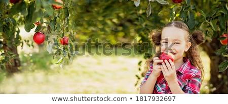Aranyos kicsi óvodás lány alma fű Stock fotó © Lopolo