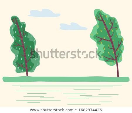 風の強い 天気 公園 森林 ベクトル ストックフォト © robuart
