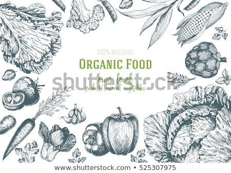 野菜 手描き 市場 メニュー デザイン 自然食品 ストックフォト © designer_things
