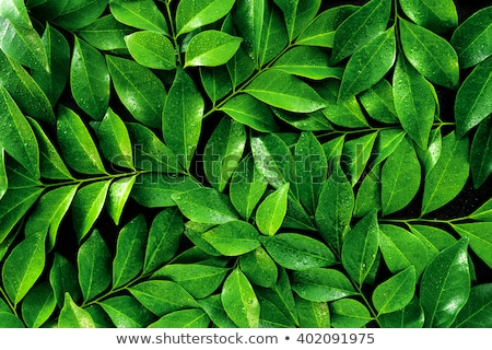 fresh dews on green leaf stock photo © ansonstock