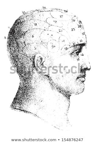 Vintage Phrenology Illustration Stock photo © 3mc
