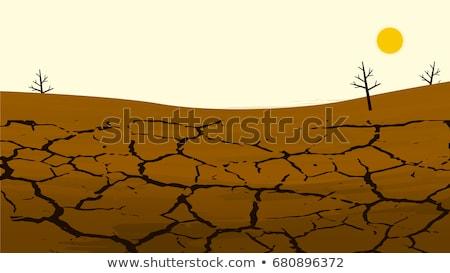repedt · száraz · föld · tele · napfény · nyár - stock fotó © alvinge