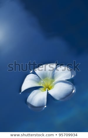 Frangipani flower in a water at night time. Conceptual theme for Stock photo © moses