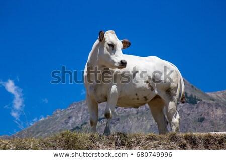 barna · ló · testtartás · nyár · évszak · mező - stock fotó © rglinsky77