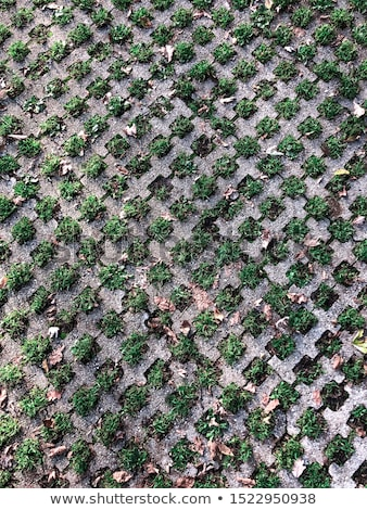 Büyük diyagonal taş yeşil ot çim Stok fotoğraf © bobkeenan