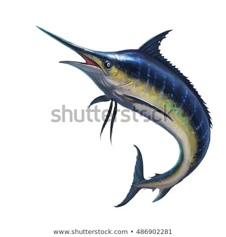 Hal tenger kék vektor izolált illusztráció Stock fotó © dagadu