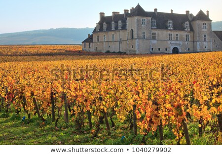 autumn leaves in vineyard stock photo © inaquim
