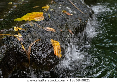 waterfall in forest crystal clear water stock photo © photocreo