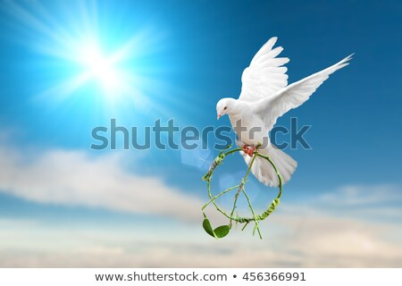 dove peace symbol holding an olive branch   Stock photo © creative_stock