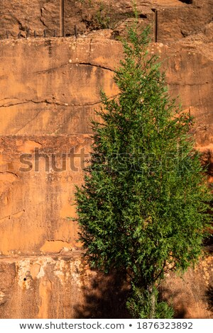 pine against red rocks stock photo © brm1949
