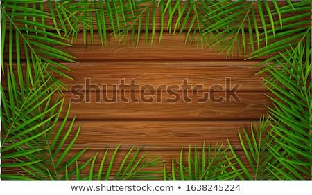 Blank paper scroll on summer tropical background, vector illustration Stock photo © carodi