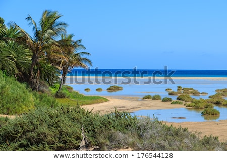 Sotavento Beach in Fuerteventura, Spain Stock photo © nito