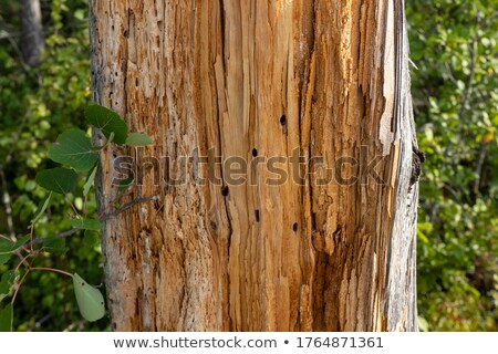 Rot boom boomstam textuur hout Stockfoto © mtmmarek