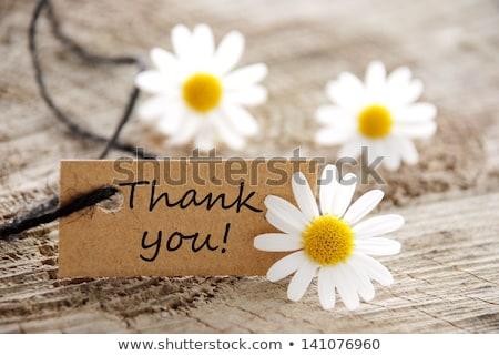 thank you greeting card with flower stock photo © balasoiu