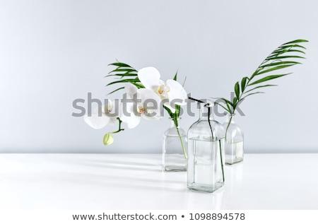 Stock fotó: Orchidea · virágok · egyszerű · váza · fehér · asztal