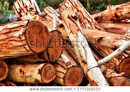 Stacked Pine Logs in Spring Coniferous Forest Stock photo © tainasohlman