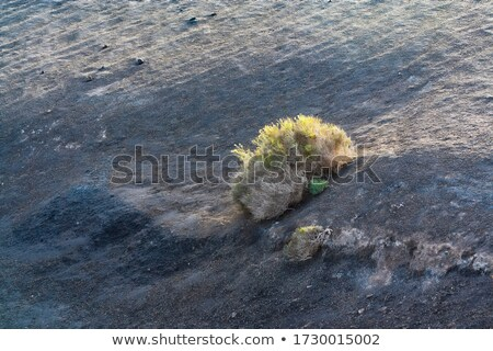 sunbeam on a bush in volcanic area  Stock photo © meinzahn