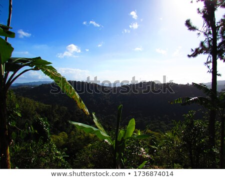 Trees with mountain range in the background, Jamaica Stock photo © bmonteny