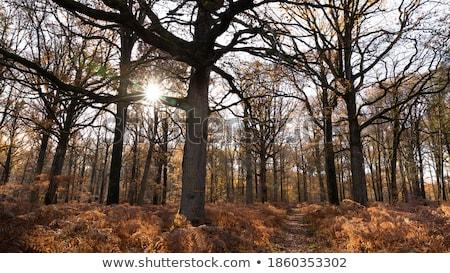 Fallen hornbeam leaf Stock photo © olandsfokus
