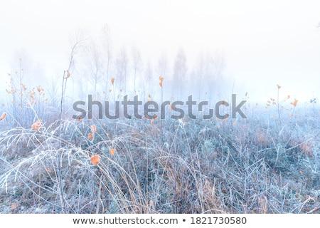 Mroźny krajobraz rustykalny drogowego wzgórza mętny Zdjęcia stock © zhekos