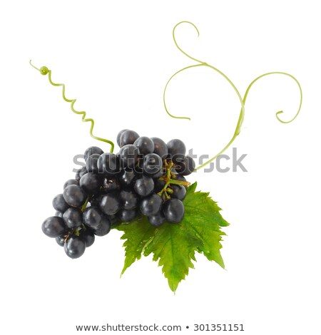 Bunch of ripe Grapes Stock photo © Klinker