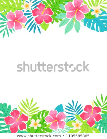 frontière · coloré · hibiscus · fleurs · rose · fraîches - photo stock © neirfy