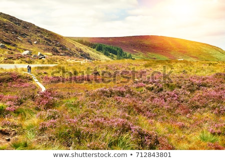 Wicklow Gap, County Wicklow, Ireland Stock photo © phbcz