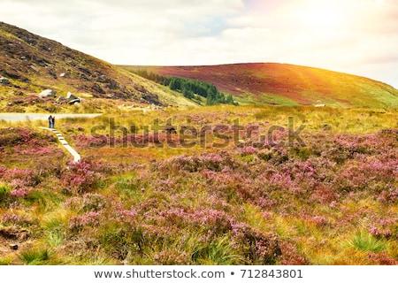 Brecha Irlanda viaje montanas paisajes aire libre Foto stock © phbcz