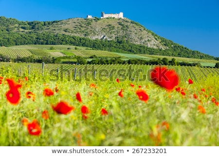 ruins of Devicky Castle with vineyards, Czech Republic Stock photo © phbcz