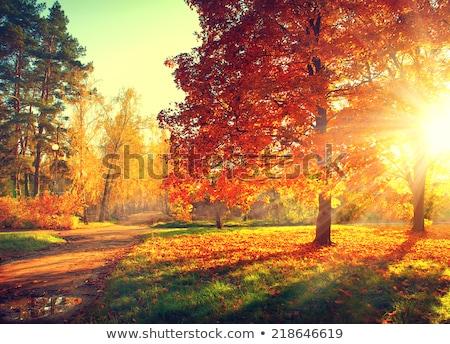 autumn tree at sunset stock photo © homydesign