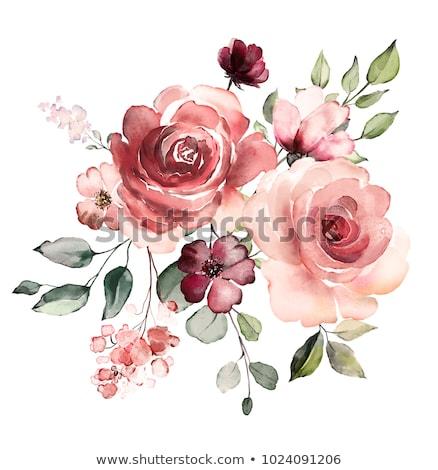Steeg bloem schets geïsoleerd witte voorjaar Stockfoto © pakete