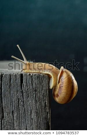 улитки старое дерево природы лет животного насекомое Сток-фото © viperfzk
