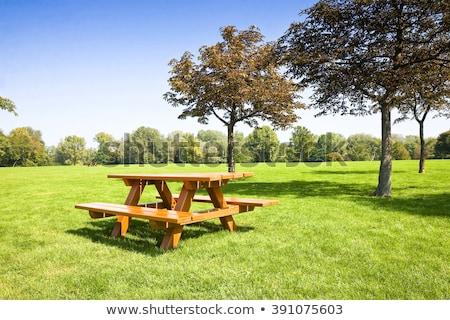 Natuur scène picknicktafel park illustratie boom Stockfoto © bluering