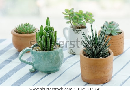 A plant in a cup-shaped pot Stock photo © bluering