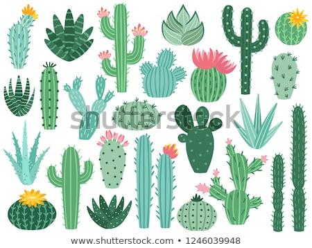 Egzotikus kaktusz virág növekvő edény közelkép Stock fotó © OleksandrO
