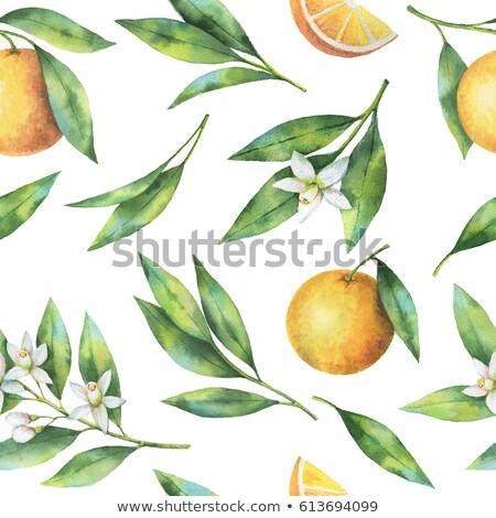 Mandarynka pomarańczy przyprawy drewna tle śniadanie Zdjęcia stock © M-studio