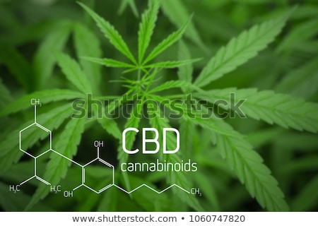 Cannabis Leaf Background Stock photo © Bigalbaloo