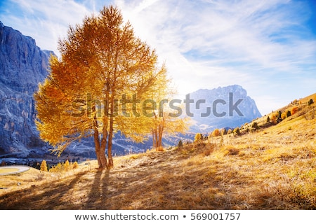 Bright yellow larches glowing in the sunlight. Location Dolomiti Stock photo © Leonidtit