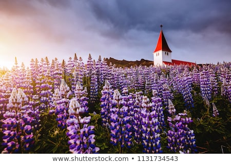 Great view of the church in evening light. Location Vik village, Stock photo © Leonidtit